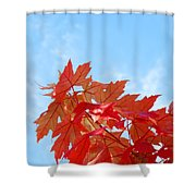 Autumn Landscape Fall Leaves Blue Sky White Clouds Baslee Shower Curtain
