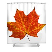 Autumn Leaf 3 Shower Curtain