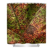 Autumn Leaf Detail Shower Curtain