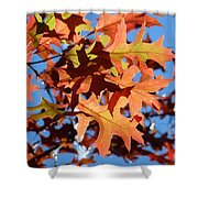 Autumn Leaves 17 Shower Curtain