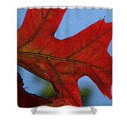 Autumn Leaves 18 Shower Curtain