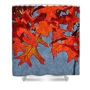 Autumn Leaves 19 Shower Curtain
