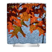 Autumn Leaves 20 Shower Curtain