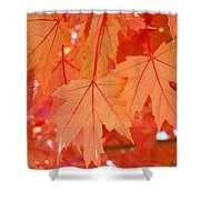 Autumn Leaves Art Prints Orange Fall Leaves Baslee Troutman Shower Curtain