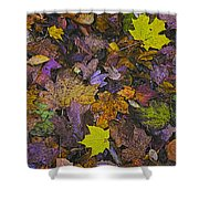 Autumn Leaves At Side Of Road Shower Curtain