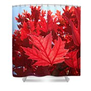 Autumn Leaves Fall Art Bright Red Leaves Baslee Troutman Shower Curtain