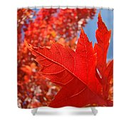 Autumn Leaves Fall Art Red Orange Leaves Blue Sky Baslee Troutman Shower Curtain