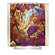 Autumn Leaves In Blue Sky Shower Curtain