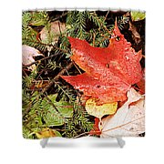Autumn Leaves Shower Curtain by Larry Ricker