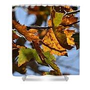 Autumn Leaves Macro 1 Shower Curtain