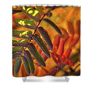 Autumn Leaves - Patagonia Shower Curtain