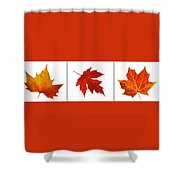 Autumn Leaves Triptych Shower Curtain