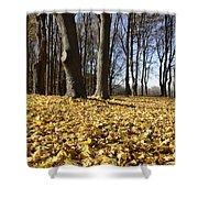 Autumn Maple Forest - Massachusetts Usa Shower Curtain