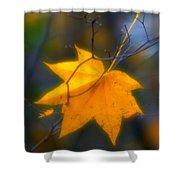 Autumn Maple Leaf Shower Curtain