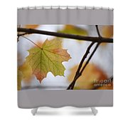 Autumn Maple Leaves Horizontal Shower Curtain