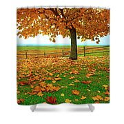 Autumn Maple Tree And Leaves Shower Curtain