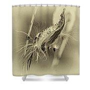 Autumn Milkweed 7 - Sepia Shower Curtain