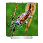 Autumn Milkweed 7 Shower Curtain