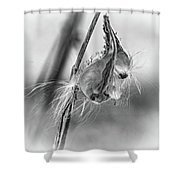 Autumn Milkweed 9 - Bw Shower Curtain