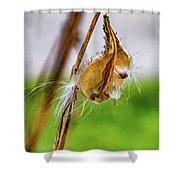 Autumn Milkweed 9 Shower Curtain