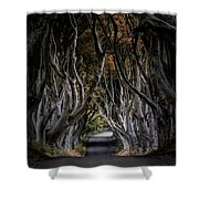 Autumn Morning At Dark Hedges Alley  Shower Curtain