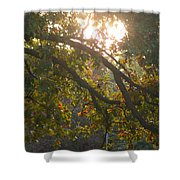 Autumn Morning Glow Shower Curtain