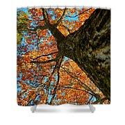 Autumn Oak Shower Curtain