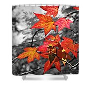 Autumn On Black And White Shower Curtain