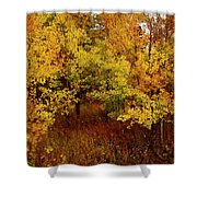 Autumn Palette Shower Curtain by Carol Cavalaris