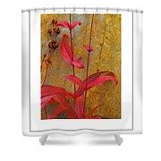 Autumn Penstemon Poster Shower Curtain