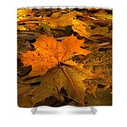 Autumn Quilt Shower Curtain