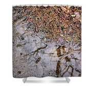 Autumn Rain On Concrete Shower Curtain