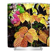 Autumn Raspberries Shower Curtain
