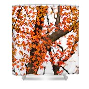 Autumn Red Leaves On A Tree   Shower Curtain