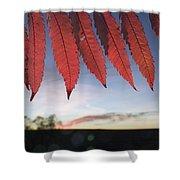 Autumn Red Sumac Leaves Shower Curtain