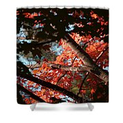 Autumn Red Trees 2015 02 Shower Curtain