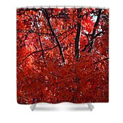 Autumn Red Trees 2015 Shower Curtain