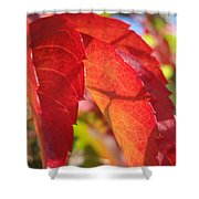 Autumn Reds Shower Curtain