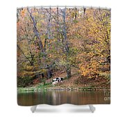 Autumn Reflections Cow Farm Shower Curtain