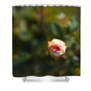 Autumn Rosebud Shower Curtain