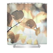 Autumn Season Leaves On A Tree In Sun Light Shower Curtain