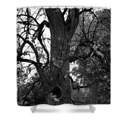 Autumn Spook In Black And White Shower Curtain