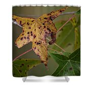 Autumn Spotted Shower Curtain
