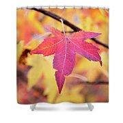 Autumn Still Shower Curtain