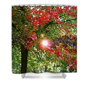 Autumn Sun Shower Curtain