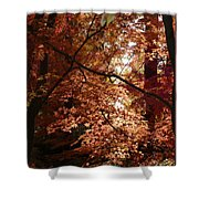 Autumn Sunshine Poster Shower Curtain