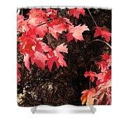 Autumn Surprise Shower Curtain