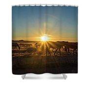 Autumn Sunset Shower Curtain by Nicole Markmann Nelson
