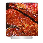 Autumn Tree Art Prints Orange Red Leaves Baslee Troutman Shower Curtain