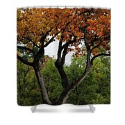 Autumn Tree II Shower Curtain